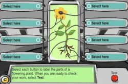 plant scan
